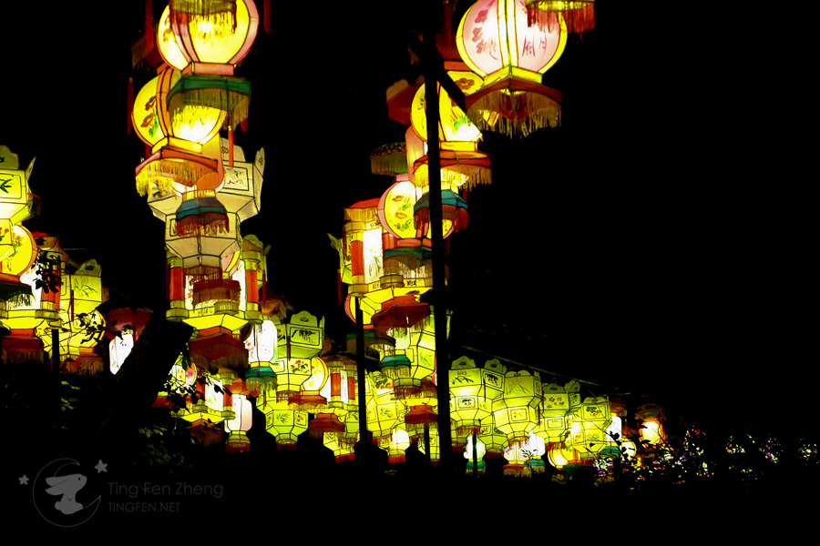 china lights lanterns - ting fen zheng