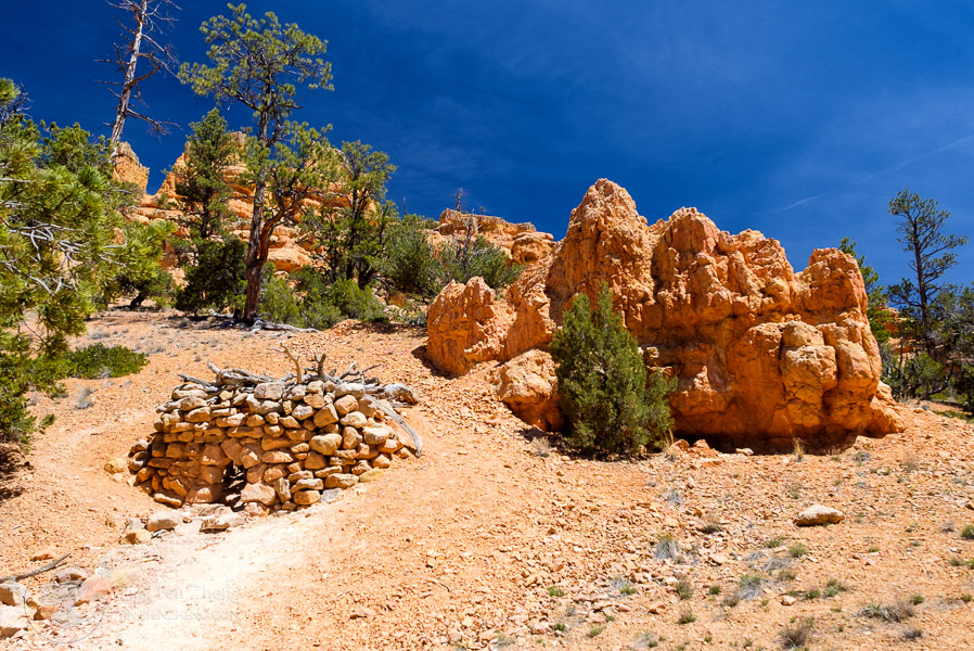 Red Arches Trail at Dixie National Forest - ting fen zheng