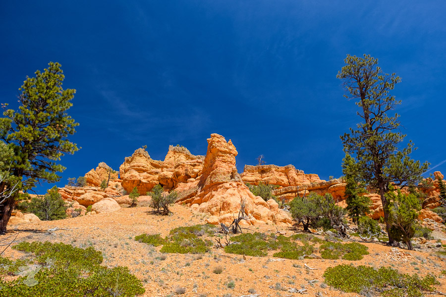 Arches Trail in Dixie National Forest