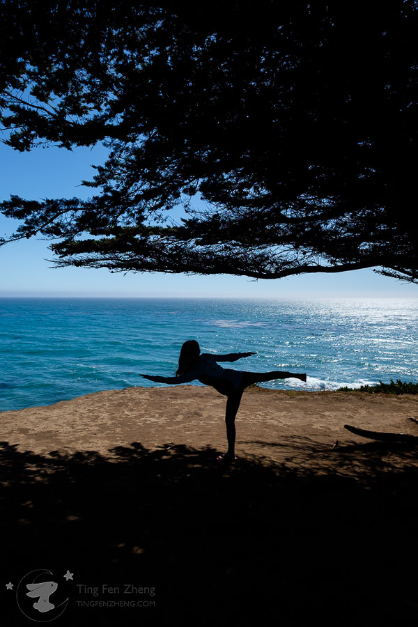Silhouette of Tree and yoga pose