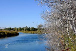 trees water - ting fen zheng