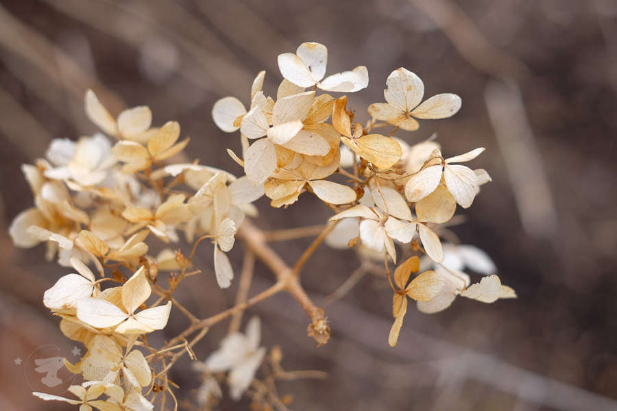 light brown flowers - ting fen zheng