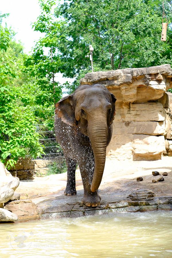 elephant taking a bath - ting fen zheng