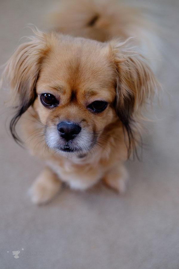 dog closeup - ting fen zheng