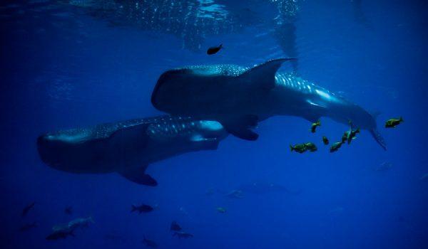 Georgia Aquarium Visit