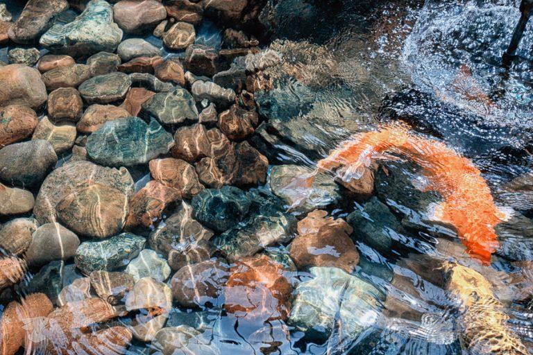 ting fen zheng - fishes water splash