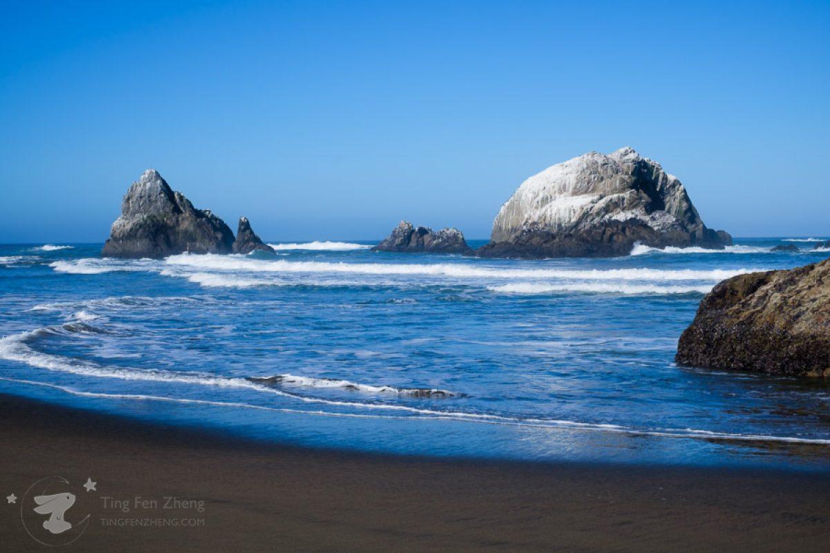 Sequoia and California Coast Road Trip