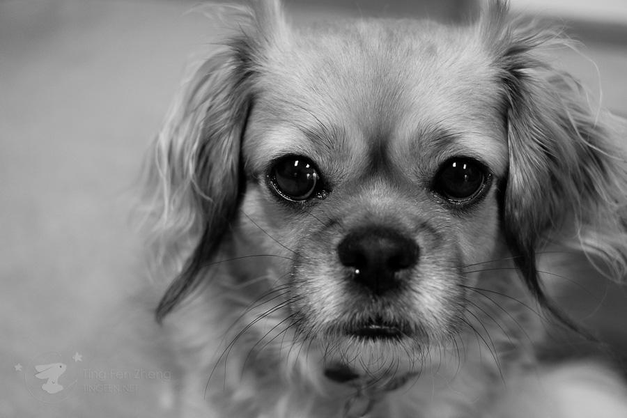 Dog black & white