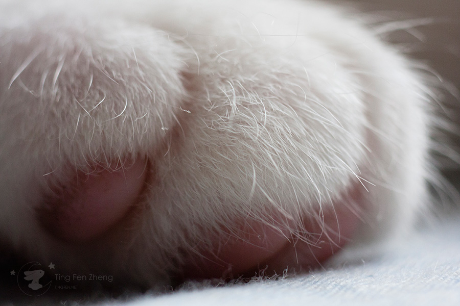 Cat foot closeup