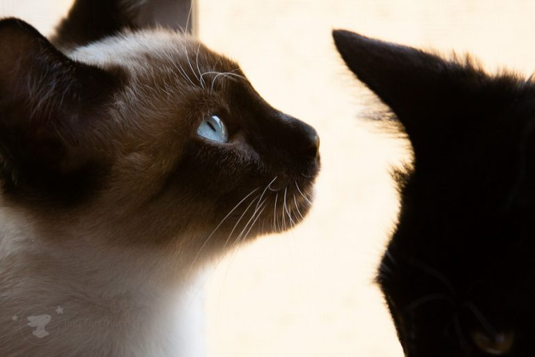 Cat side profile