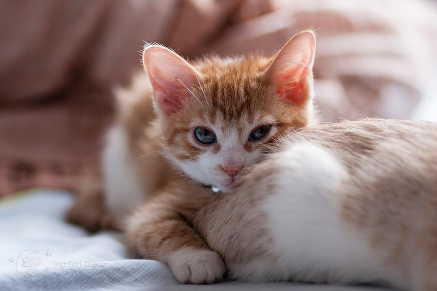 Kitten on bed